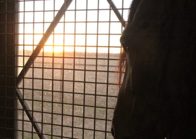 Sunset looking out of stall